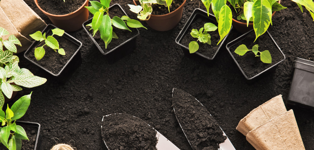 Targi ogrodnicze wSzepietowie: kwiaty, rozsady iporady