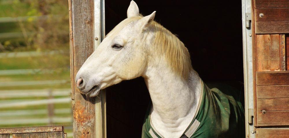 Szczelniejszy system rejestracji koni iosłów