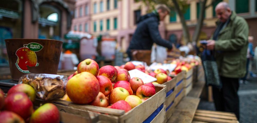 Chłodnie pełne jabłek… złej jakości