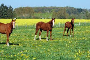 Hodowla koni – hobby dla bogatych czy sposób na biznes?