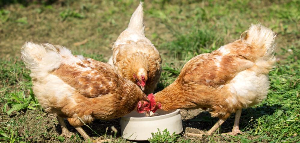 GMO: czy problem można rozwiązać?