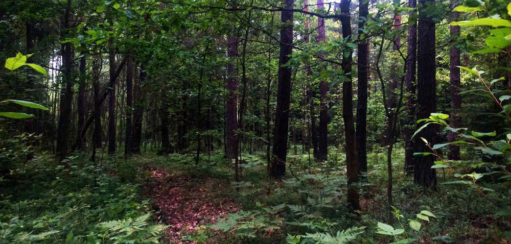 Prawo pierwokupu lasu będzie miało państwo