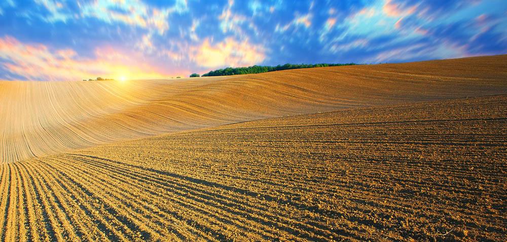 Rolnik przywiązany do ziemi?