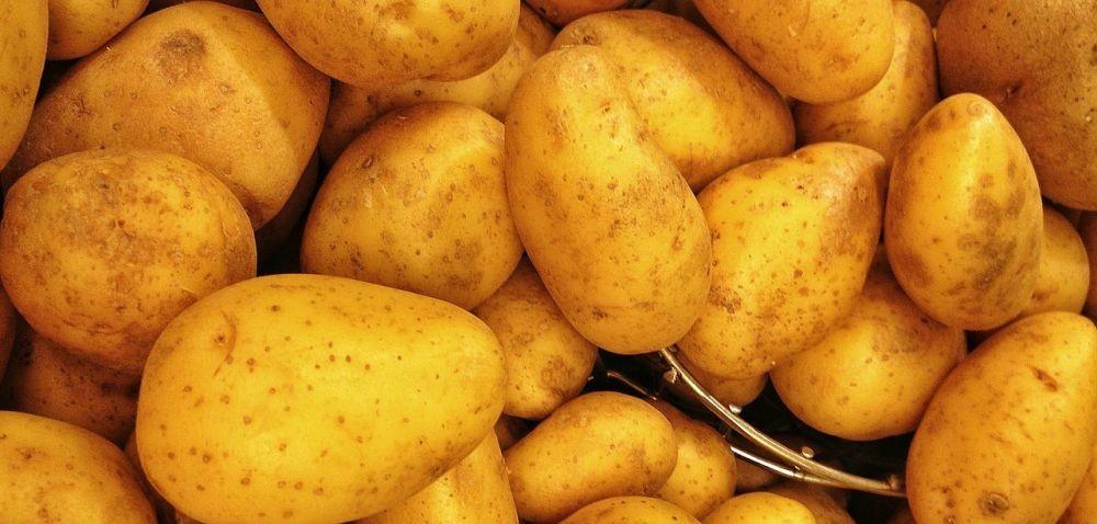 9 nowych odmian ziemniaka: co je charakteryzuje?