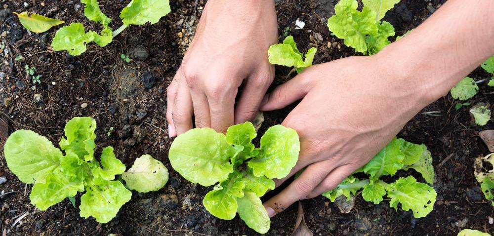 Warzywa gruntowe: co może się opłacić?