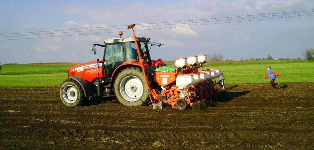 Kukurydza: korzystać zwilgoci czy czekać na ciepło?