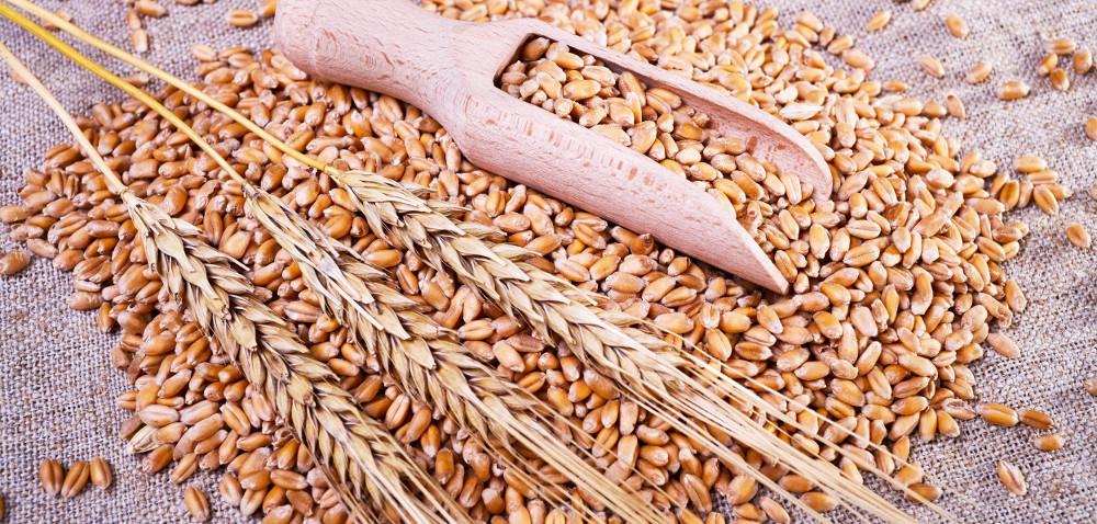 Rynek zbóż iżywca: ceny wdół!