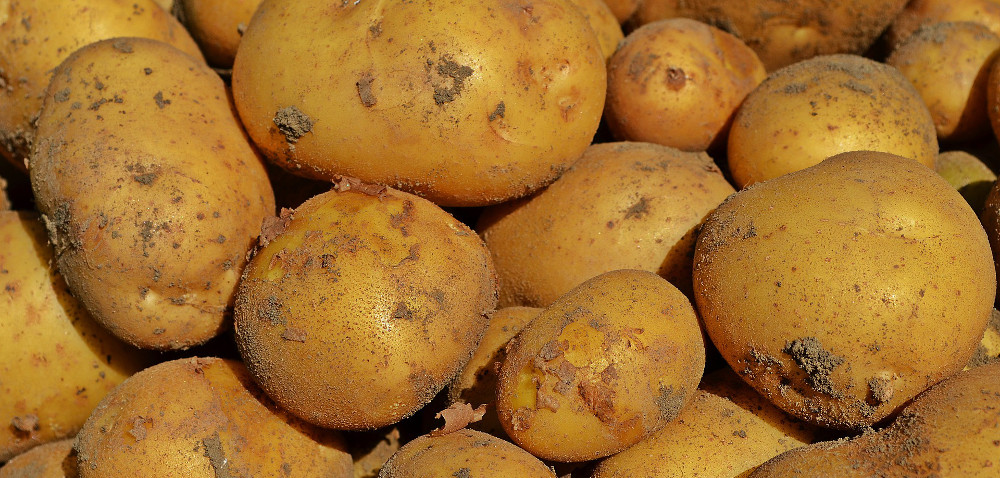 Ziemniaki: sadzić czy czekać?