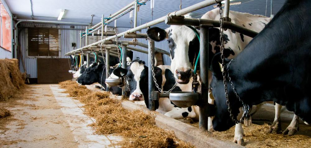 Pomoc dla hodowców: kary będą umorzone?