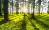 zalesianie