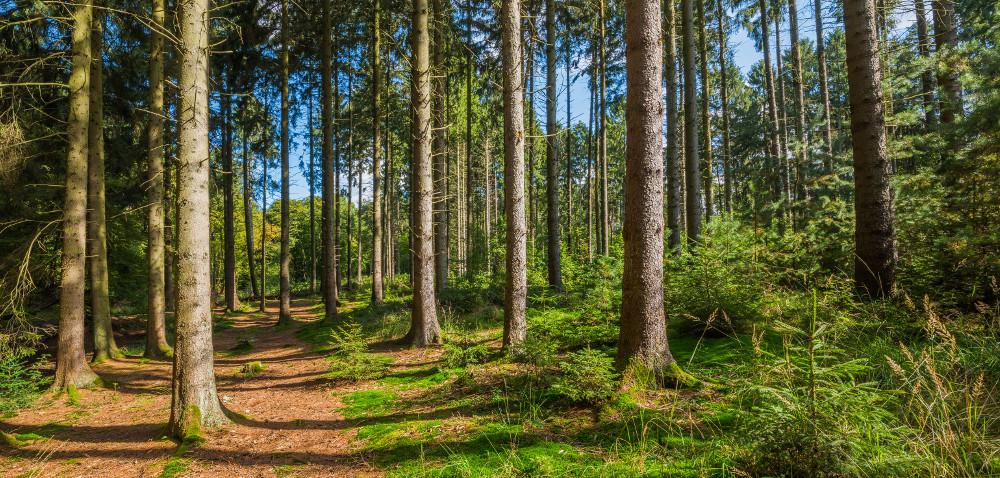 Posadź las na nieużytkach: wkrótce wnioski!