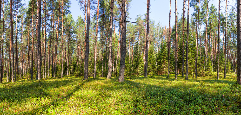 Do 16 maja: oświadczenie owykonaniu zalesiania