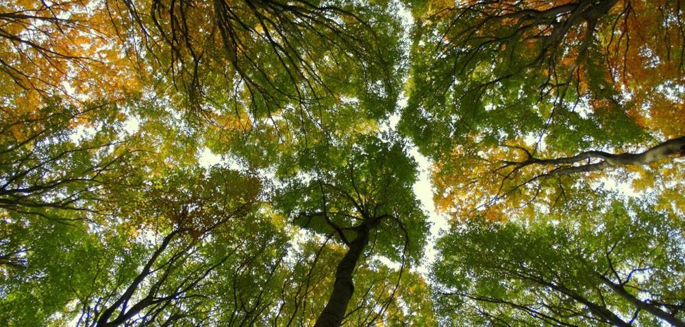 Ile za las? Może warto go posadzić?