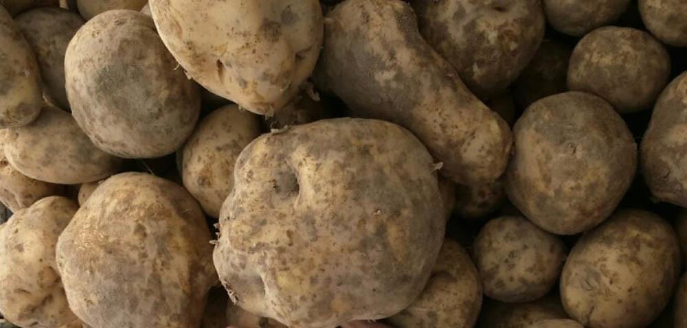 Polskie ziemniaki drogie tylko wsklepach?