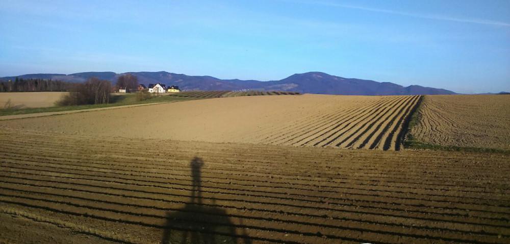 Plantacje ziemniaka potrzebują dobrze zbilansowanego nawożenia