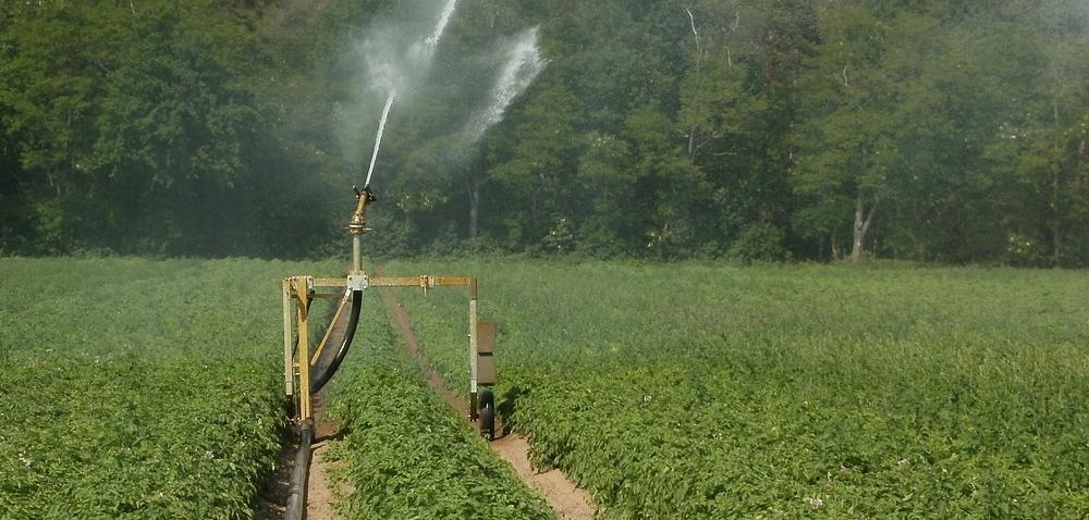 Wielkopolska: ziemniaki nieźle radzą sobie zsuszą