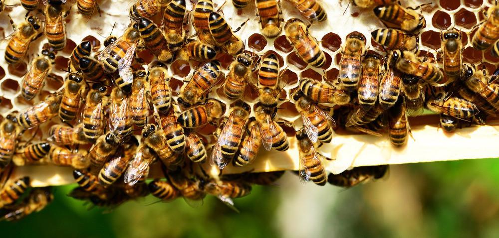 Pszczoły za pan brat zurzędnikami