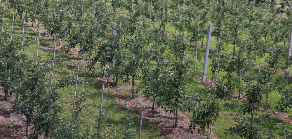 Agrosec – owoce: więcej jabłek! Ale po co?