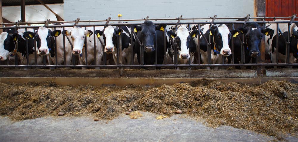 Za kilka dni ruszą wypłaty wsparcia dla producentów mleka itrzody