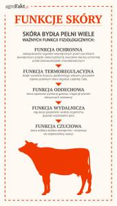 funkcje skóry bydła