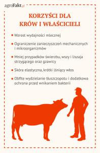 korzyści czystej sierści bydła