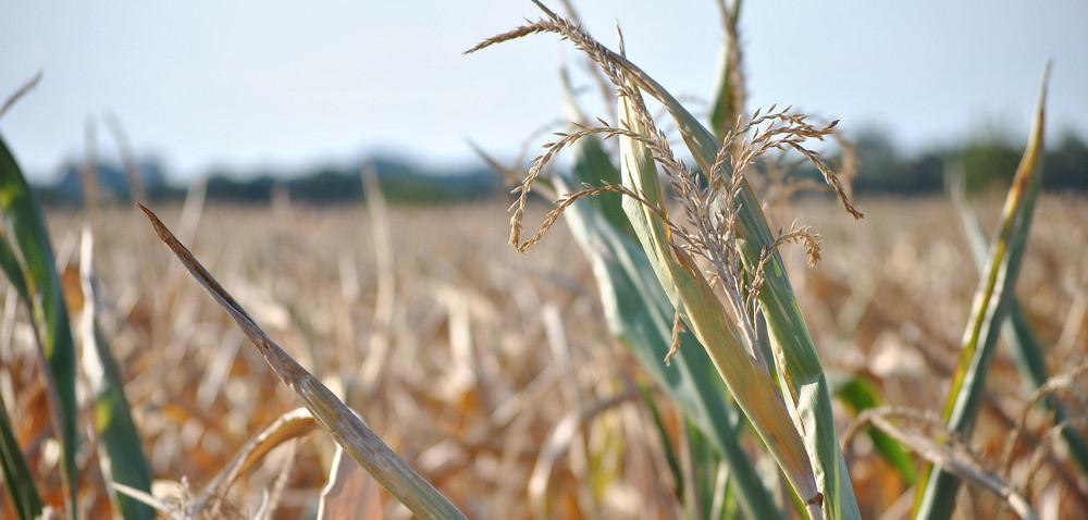 Pomoc za straty spowodowane suszą inawałnicami