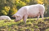 bioasekuracji