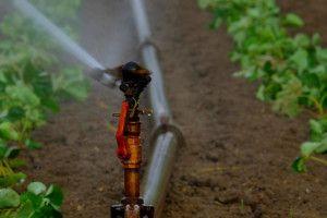 Modernizacja gospodarstw rolnych. Dotacja na nawadnianie