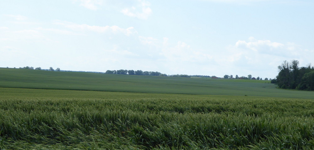 Ośrodki doradztwa rolniczego: ustawa bez poprawek