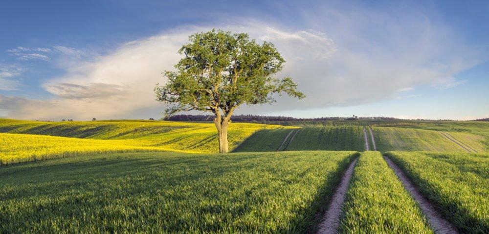 Ustawa owstrzymaniu sprzedaży ziemi znów wSejmie