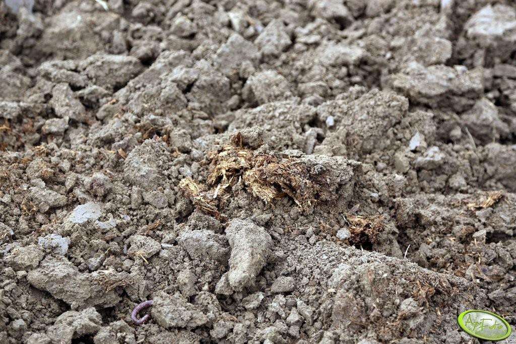 analiza gleby