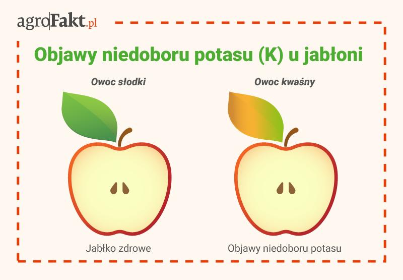 akademia nawożenia jabłka