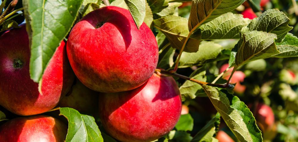 Kara od UOKiK dla T.B. Fruit Polska