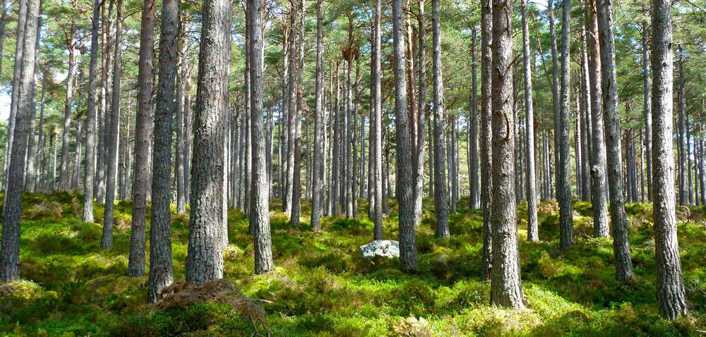 Rusza monitoring we wszystkich lasach