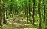 premia zalesieniowa