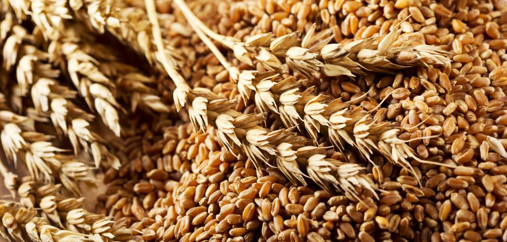 Ceny zbóż na świecie – wyraźne obniżki