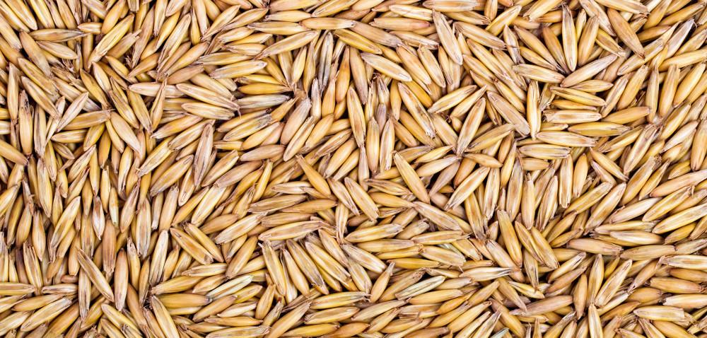 Niskie ceny zbóż: przez import zUkrainy?