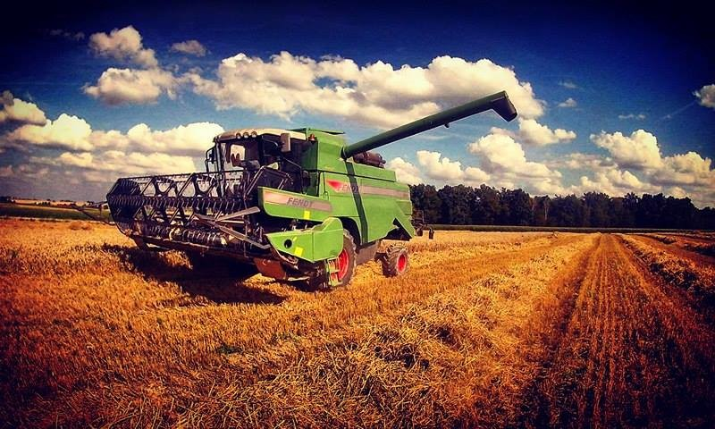 lubelskie zmagania z pszenic