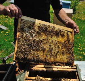 ogólnopolskie dni pszczelarza