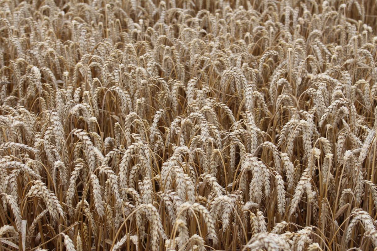 rolnik itechnologia