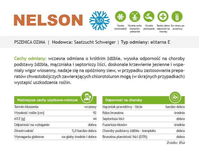 charakterystyka odmiany pszenicy ozimej Nelson