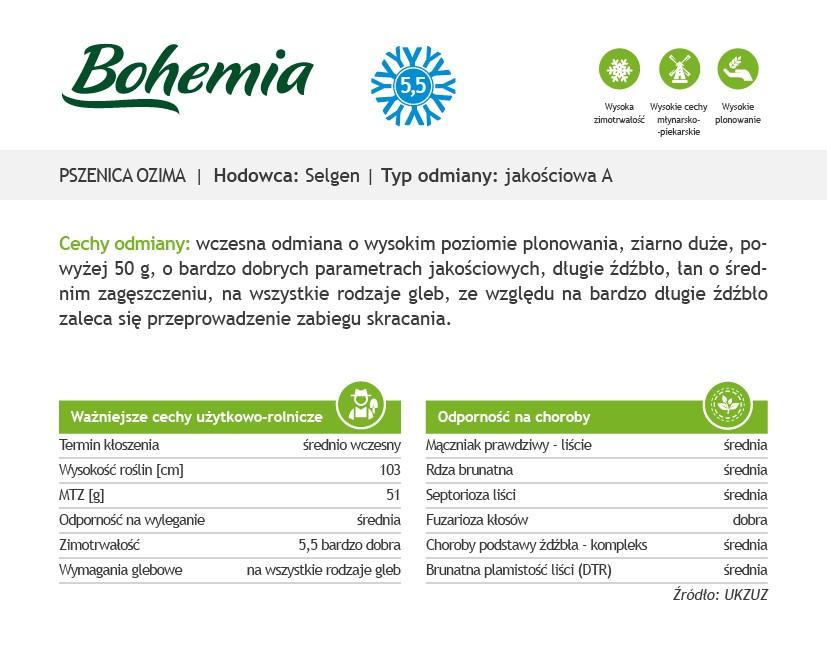 pszenica ozima Bohemia