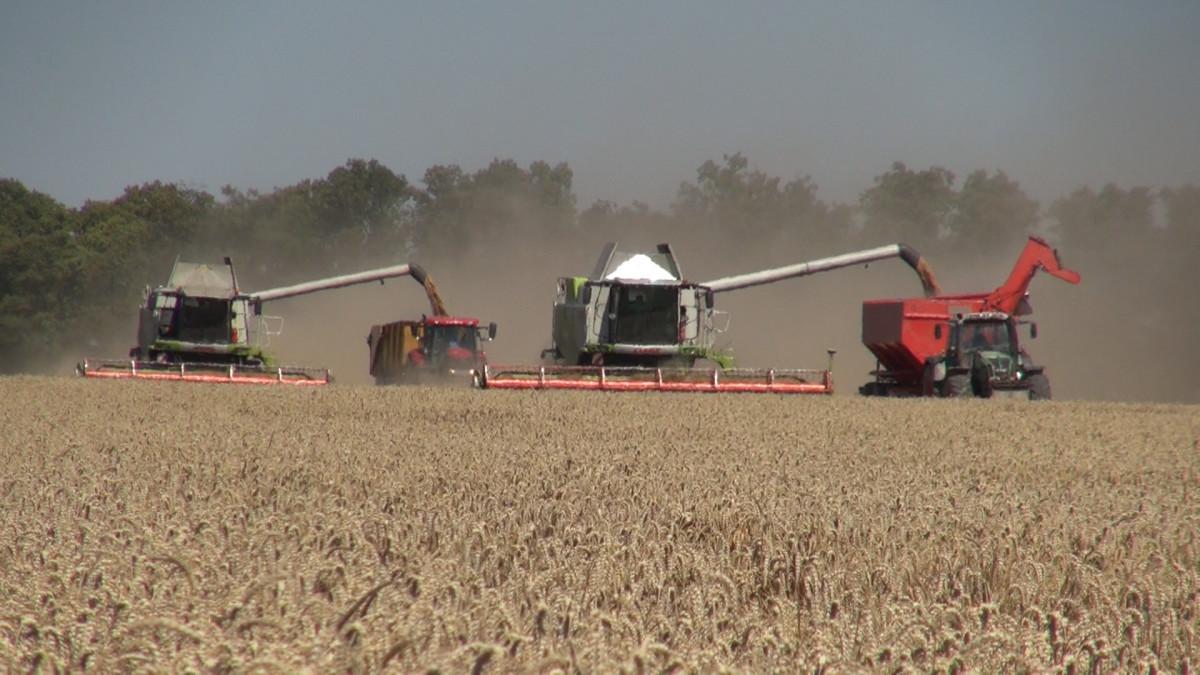 materiał top farms nasiona
