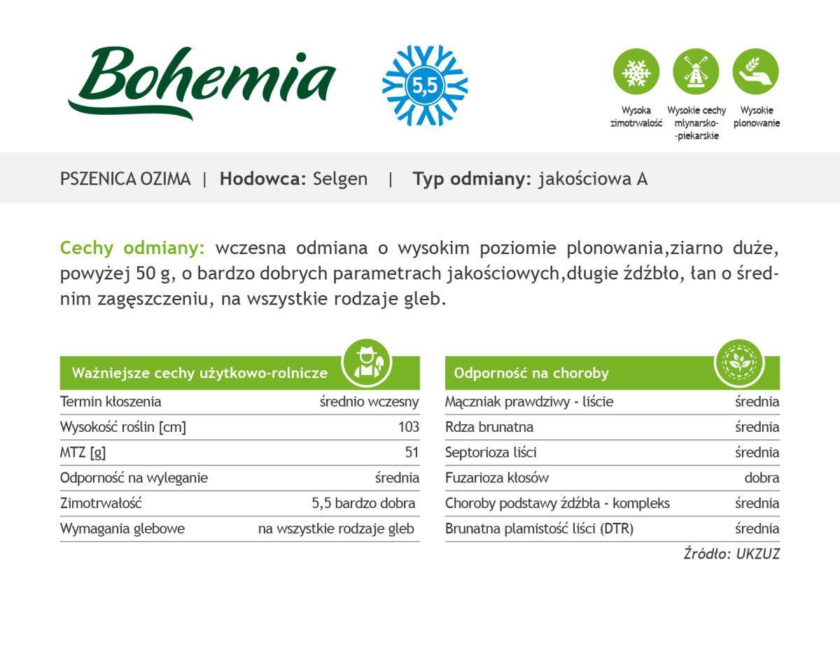 Czym charakteryzuje się pszenica ozima Bohemia?