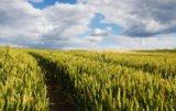 Południowy wschód: jaka pogoda czeka rolników?