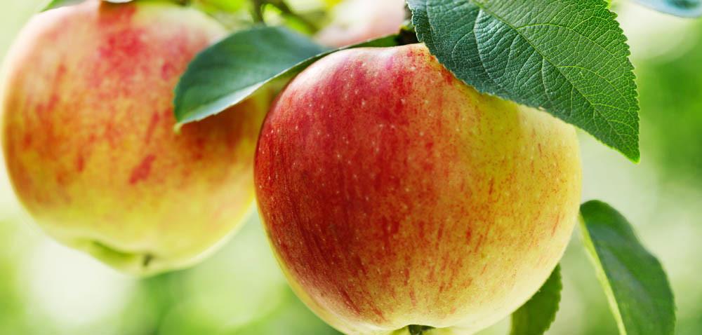 Rynek owoców: niższe zbiory iwyższe ceny