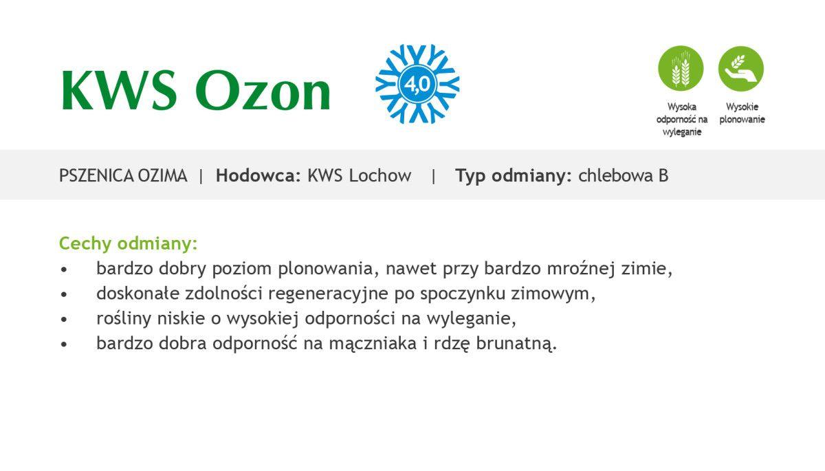 Czym charakteryzuje się pszenica ozima KWS Ozon?