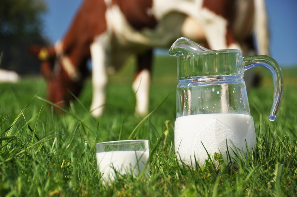 wsparcie dla producentów mleka