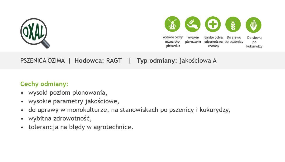 Czym charakteryzuje się pszenica ozima Oxal?