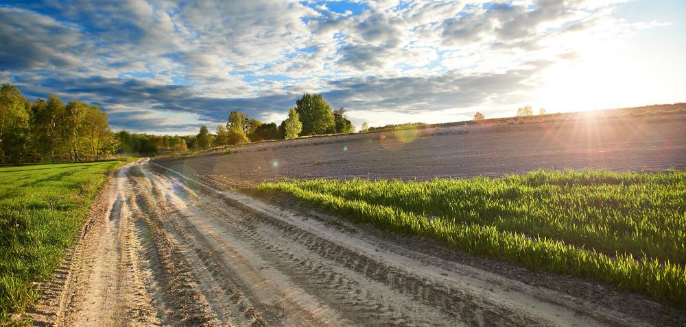 Jak projekt NEFERTITI pomoże rolnikom [AKTUALNOŚCI]